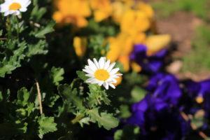 F5.6_白い花の画像