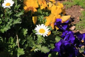 F32_白い花の画像
