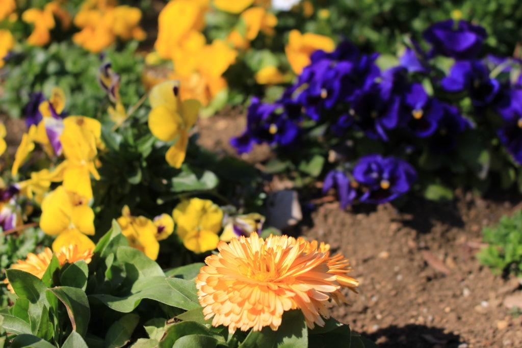 F5_橙色の花の画像