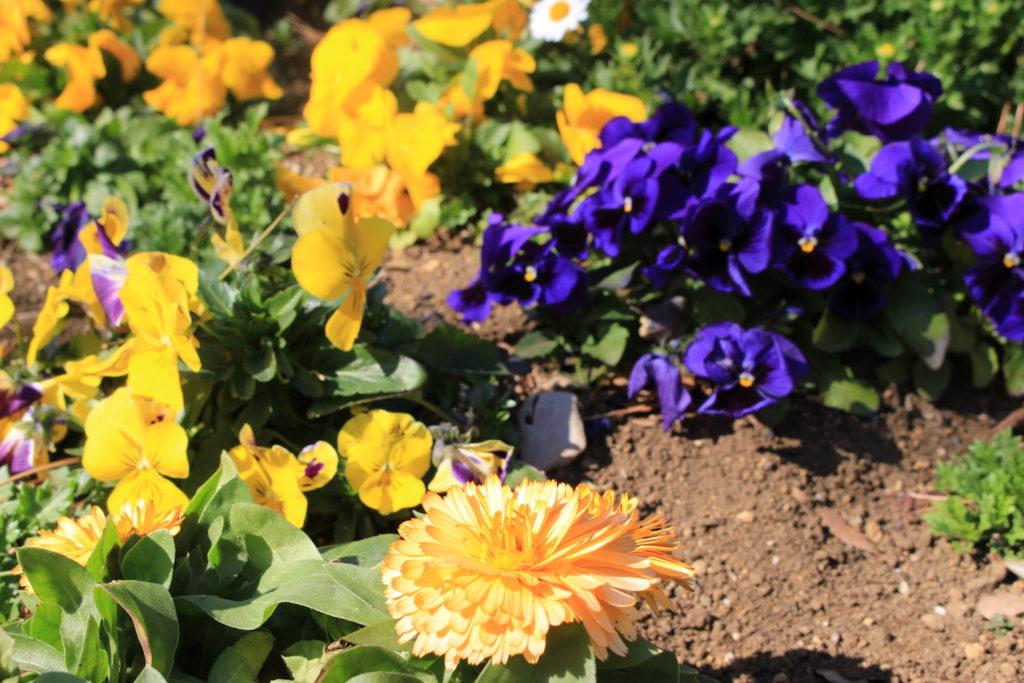 F10_橙色の花の画像