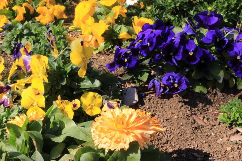 F29_橙色の花の画像