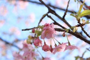 F5.6_梅の花