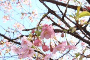 F29_梅の花