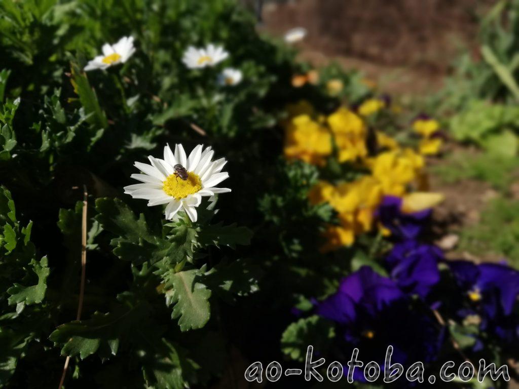 白い花の中心に蜂がいる画像