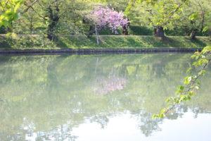 リフレクションした桜トンネルの画像