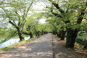 桜トンネルの画像2