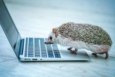 ハリネズミがPCに興味を持つ画像
